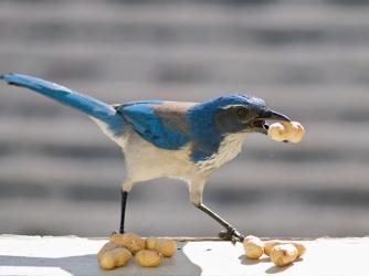 Bird Hoarding