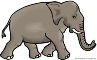 Elephant Clip