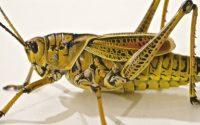 Patience, grasshopper